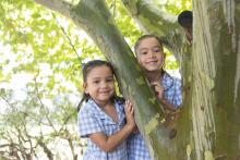 students in tree